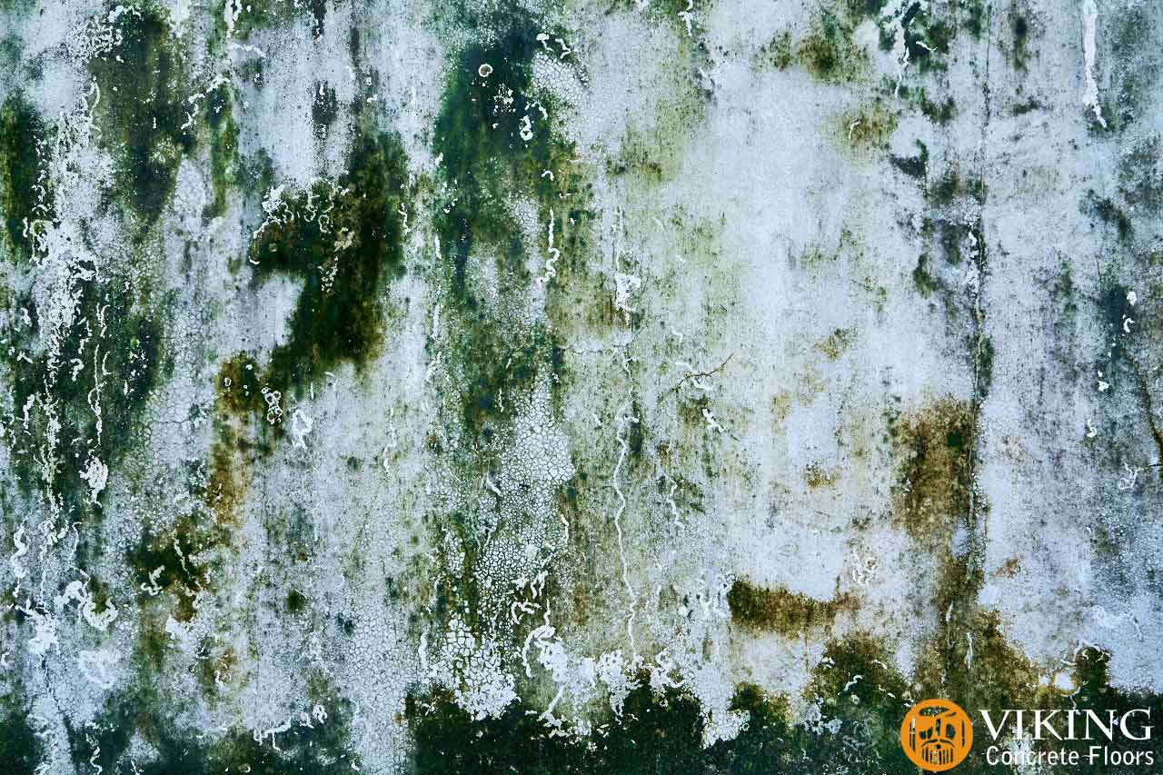 Concrete-wall-with-green-mold